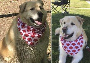 Muž chtěl utratit svého psa kvůli nadváze. Veterinář zvíře zachránil!