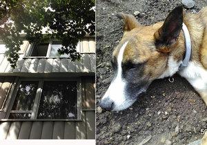 Na Děkance v Praze vyskočil pes z okna.