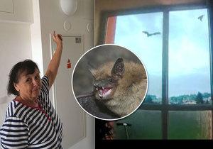 Důchodkyně Věra a Libuše uprostřed náletu okřídlených myší: Zmatení netopýři byli všude