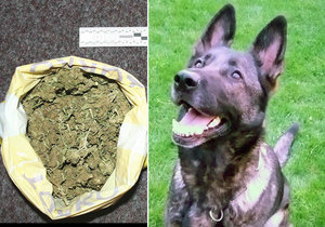 Fenka Fátima vyčuchala drogy.