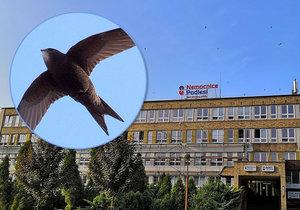 Rekonstrukci nemocnice v Třinci přizpůsobili potřebám rorýse obecného.