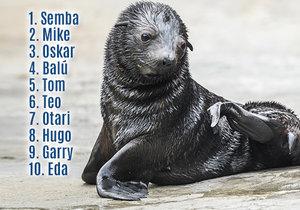 ANKETA: Jak se bude jmenovat lachtánek z pražské zoo? Chovatelé vybrali 10 návrhů, zvolte ten nejlepší!