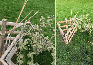 Neznámý vandal zničil vzácný dub v Čelakovského sadech u Národního muzea.