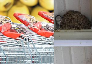 Ve Frýdku-Místku se usídlily jiřičky přímo nad nákupními košíky supermarketu. Ty jsou od ptactva značně pokálené.