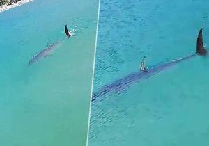 Další žralok v Jaderském moři? Podle odborníků jde o tuňáka