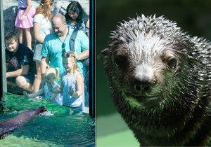 Malý lachtánek z pražské zoo se jmenuje Eda!