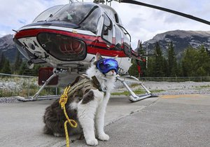 Novou hvězdou Instagramu je kočičí záchranář.