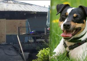 Zippy je psí hrdina (vpravo ilustrační foto)