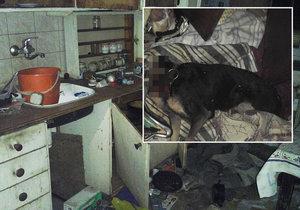 Strážnici odhalili byt hrůzy: Mrtvý pes bez hlavy, zápach a byt pokrytý výkaly!