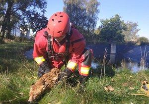 Hasič zachránil z retenční nádrže lišku, která ho poté kousla.