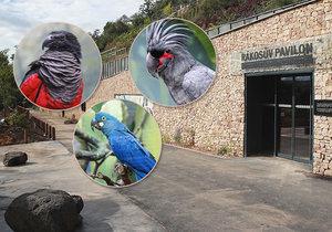 V Zoo Praha je otevřený nový pavilon exotického ptactva. Uvnitř jsou unikátní opeřenci ze tří kontinentů.