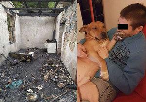 V ohni zůstal sedmiletý pitbul Kayron (na snímku) a další tři psi, o které se staral Pavel a Jana s přítelem Davidem.