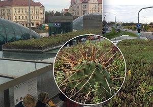 Na tramvajové zastávce na Hradčanské vyrostl na jednom přístřešku travnatý pažit. Cestující jej ocení především v létě. Jeho růst a vzhled však budou moci obdivovat celoročně.