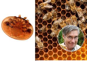 Co by se stalo, kdyby včely úplně vymřely?