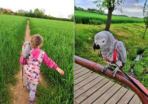 Martina zoufale pátrá po svém papouškovi: Johanku se někdo pokoušel prodat přes internet.
