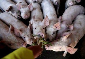 Hrozí globální nedostatek slaniny. Odborníci bijí na poplach a zmínili důvod