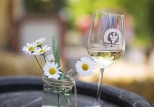 V Běchovicích se v září schyluje k 2. ročníku Slavností vína. (ilustrační foto)