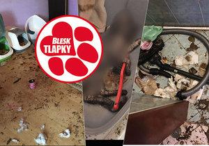 """V bytě ústecké """"dočaskářky"""" našli 16 mrtvých koček. Těla byla i v mrazáku!"""