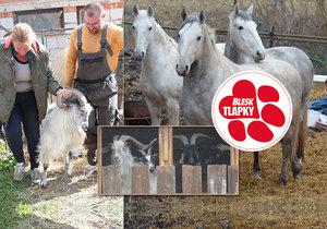 Kozy z balkonu za tři sta, koně na převýchovu! Týraná zvířata z kauzy Číčovice propadla státu.