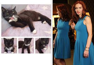 Nora Fridrichová si vzala kotě z útulku