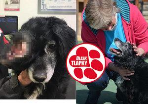 Přes obří nádor ani neviděl, teď je zPepíčka zdravý veselý pes. Najde láskyplný domov?