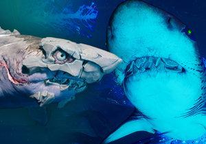 Maneater je povedené akční RPG, v němž je hlavní anti-hrdinkou samice žraloka tygrovaného.