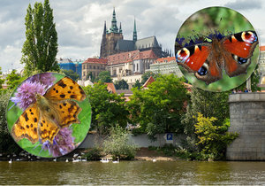 Motýli v Praze