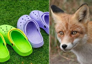 Liška na předměstí Berlína kradla boty, odnesla si přes 100 párů (ilustrační foto).