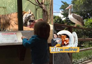 Po osmi měsících návštěv Zoo Praha jsem viděl snad všechno.