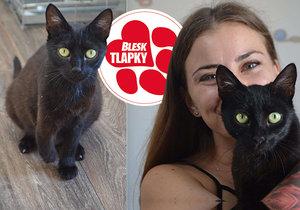 Třínohá kočička Bety se zotavuje v útulku. Odchovala koťata, teď hledá nový domov.