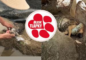 Pozor na videa falešných záchran zvířat. Jak je poznat?