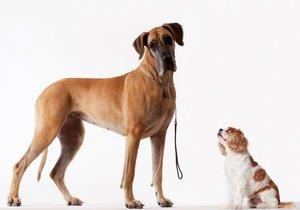 Jakého psa pořídít do bytu?