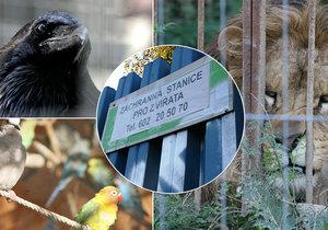 Ve Vysočanech je Záchranná stanice pro divoká a exotická zvířata, která se teď potýká s nedostatkem peněz.