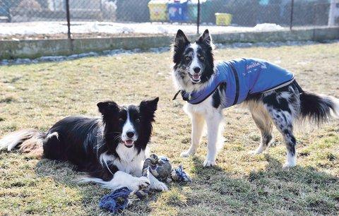 Zvířátka opanují Parukářku: Přijďte se na Den domácích mazlíčků pokochat, pobavit i poradit