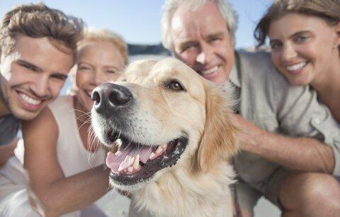 4 praktické tipy, jak cestovat se psem a kočkou