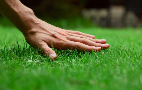 Největší nepřítel trávníku? Jste to vy!