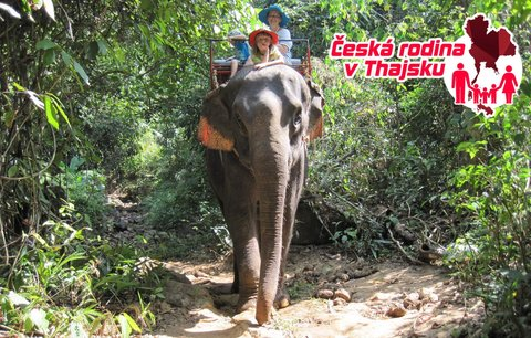 Česká rodina v Thajsku: Sloni útočí!