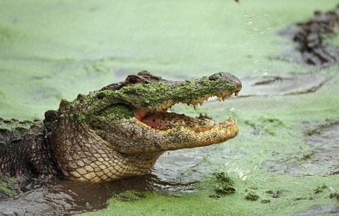 Ženu (46) sežral krokodýl, kamarádka mu ji u pláže marně lovila z tlamy