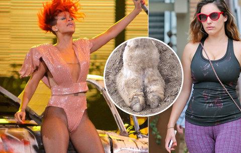 Velbloudí packy hýbou světem: Podívejte se, jak se celebritám zařízly gatě