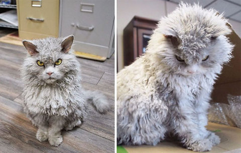 Nejnačechranější kočky na světě: Seznamte se