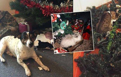 Páníčku, tvoje Vánoce mě nezajímají! 15 chlupatých ničitelů, kteří zkazili svátky