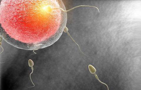 """Spermie mužů civilizovaného světa chřadnou. """"A bude hůř,"""" varuje lékař"""