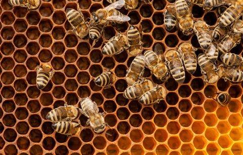 120 let včelařů v Řeporyjích: Na medobraní předvedou staré řemeslo