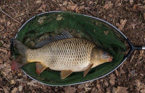 Rybářům hrozí brutální zdražení povolenek: Z 950 Kč na dva tisíce. Koupí si nádrže boháči?