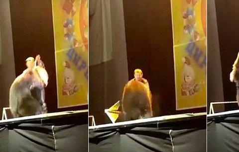 Hnus v cirkuse! Medvěd napadl muže, který ho drezuroval, ten ho zmlátil a donutil dokončit vystoupení