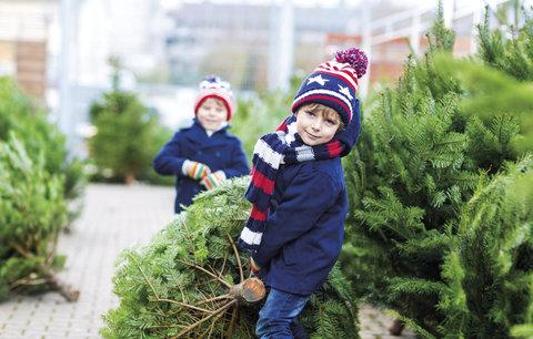 Soutěž o vánoční kavkazskou jedli!