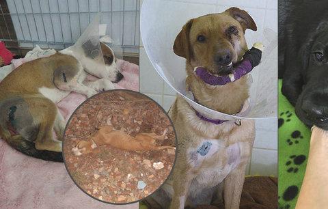 """Češi pořádají hon na tyrany zvířat: Po případu zbitého štěněte ukazují na další """"bestie"""""""