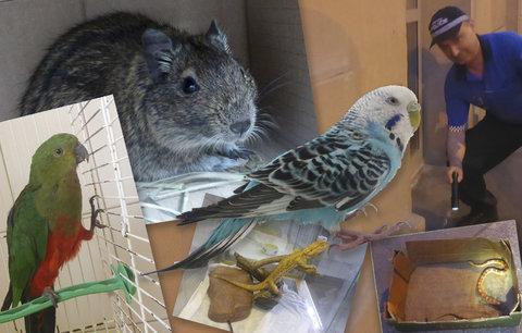 Exotická zvířata z Prahy na útěku: Strážníci o víkendu odchytli papoušky, užovku i osmáky