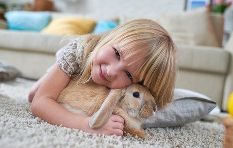 Zakrslý králíček je čistotný, společenský a překvapivě chytrý