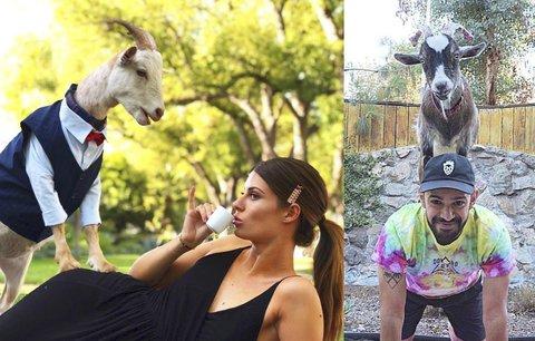 Malé kozy jsou hitem večírků v Los Angeles. Stojí kolem dvou tisíc na hodinu